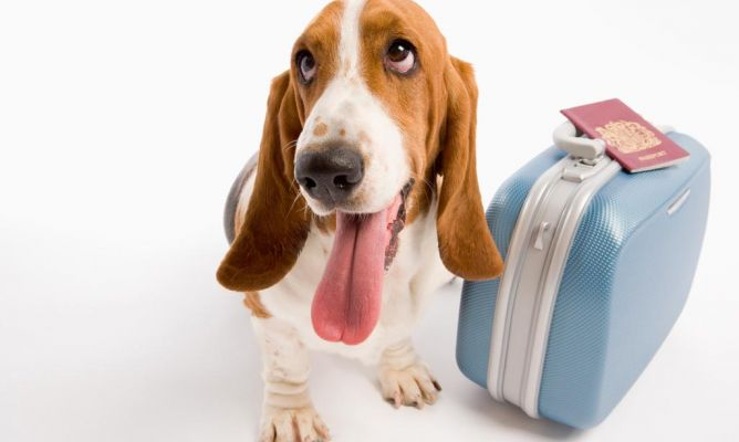 Recomendaciones para viajar con tu mascota