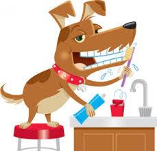higiene bucal en mascotas