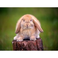 Cuidados Básicos en Conejos