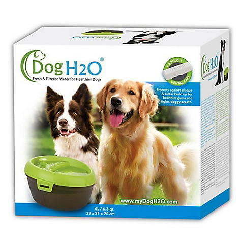 Fuente Dog H2O