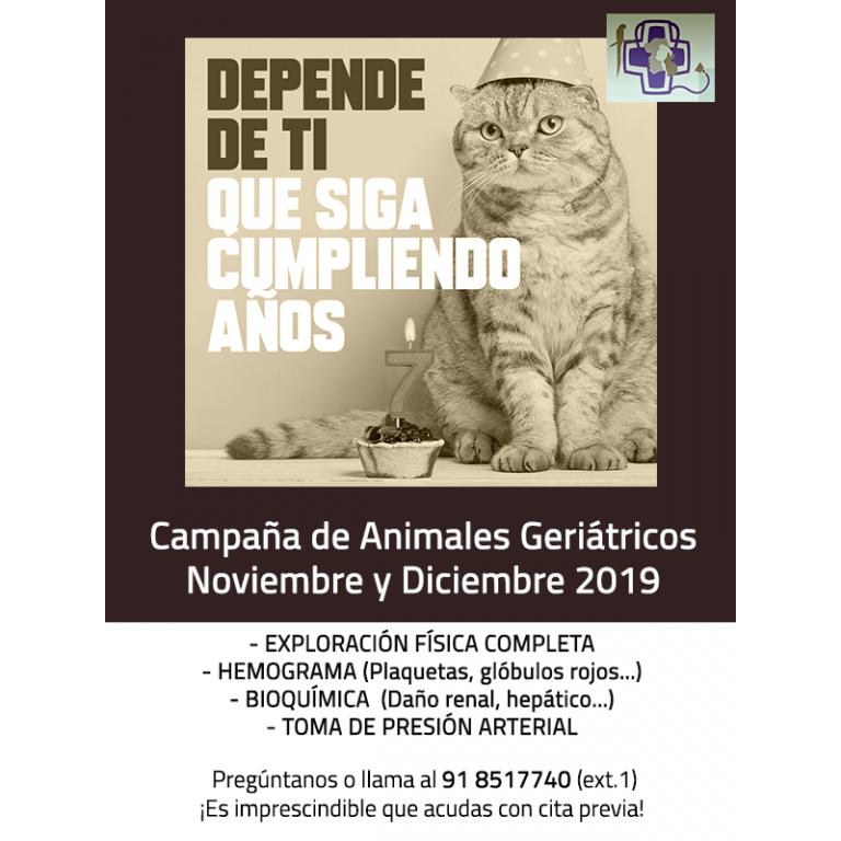 geriatricos cartel 2019 gatos