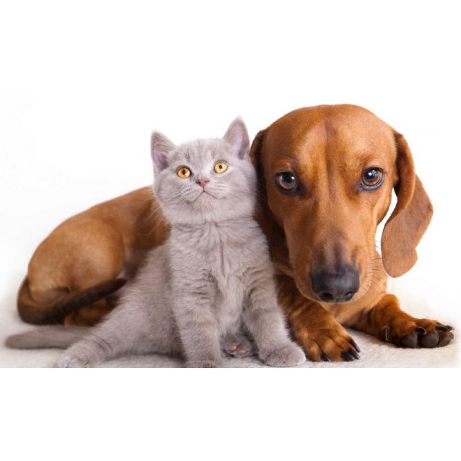 Castración en Perros y Gatos